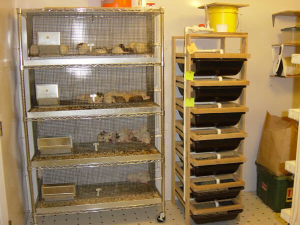 This is a full shot of the cages that we use for breeding rats.