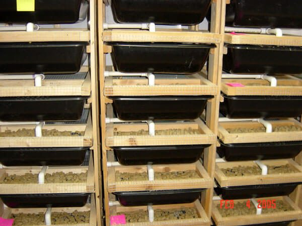 This is a pic of the rat racks that we use for pregnant and nursing moms.