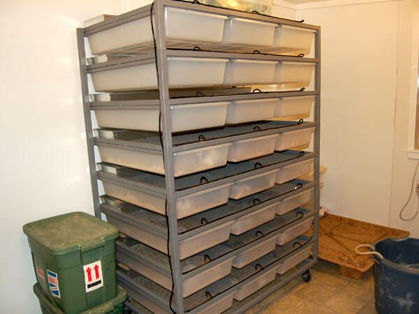 Our new ARS rodent rack full of rats and ready for production.